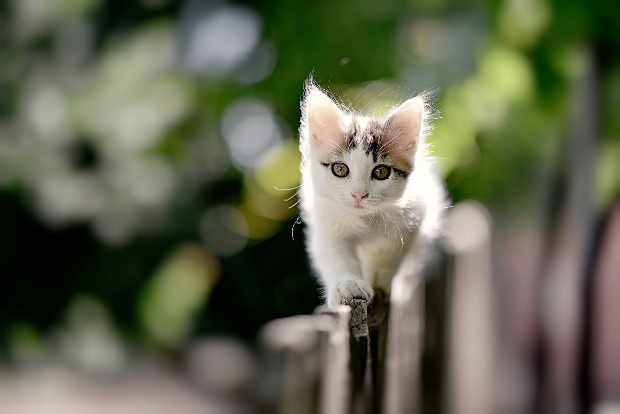 kitten-walking